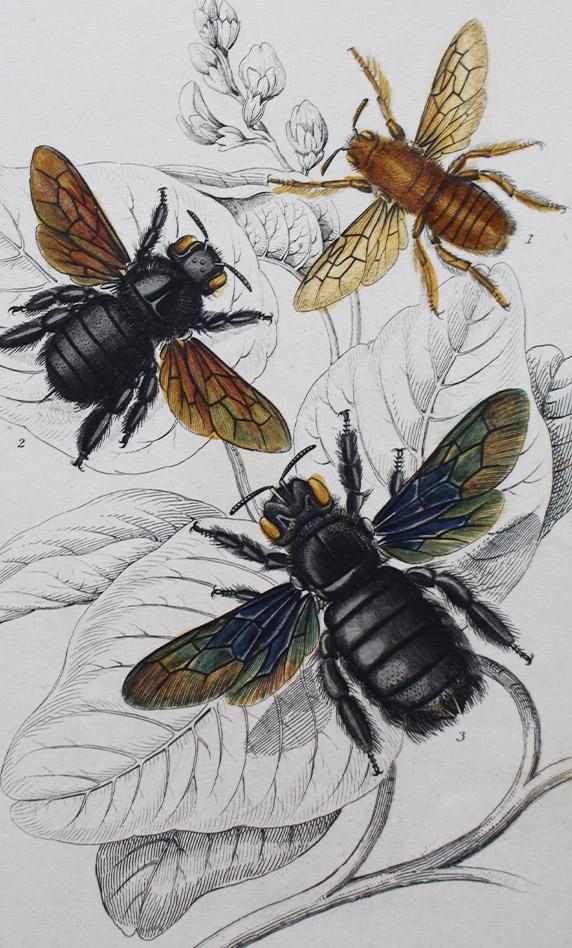 Books-Natural History
